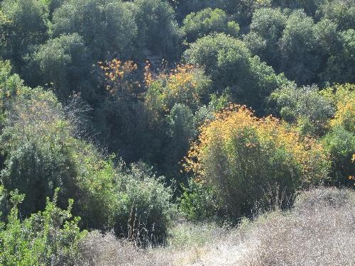 2013-11-30_Israel_Trail-b-19